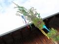 palmbuschen-binden_032